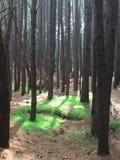 Podąża Zielonej trawy ścieżkę zdjęcia royalty free