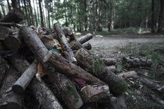 Podława lala zakopująca notuje dalej ciemnego las zdjęcia stock