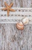 Podławy modny tło z seashells i koronka na starym drewnie Obrazy Royalty Free