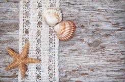 Podławy modny tło z seashells i koronka na starym drewnie Fotografia Royalty Free