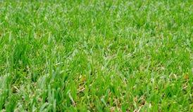 Podłoga jest pięknym zielonym gazonem zdjęcie stock