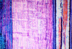 Podłużna sekcja trzon odrewniała roślina pod microscop Zdjęcie Stock