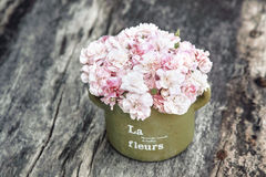 Podławi szyków kwiaty Zdjęcie Stock
