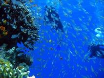 Pod Czerwonym morzem Fotografia Stock