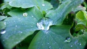 Pod deszczem Fotografia Royalty Free
