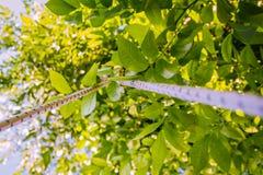pod drzewem Zdjęcie Stock