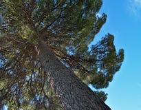 Pod drzewem Obrazy Royalty Free