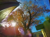 Pod drzewem Obrazy Stock