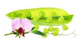 Pod of green peas with flower and leaves Royalty Free Stock Photos