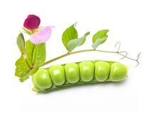 Pod of green peas Stock Images