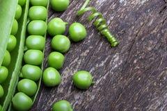 Pod of green peas Stock Photos