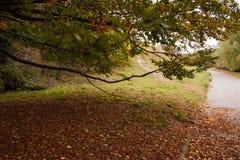 Pod koroną drzewo Obrazy Royalty Free