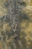 pod krokodylem fotografia stock
