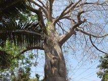 Pod mój drzewem Fotografia Royalty Free