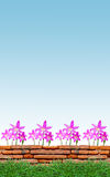Pod niebieskim niebem cebulkowy kwiat Fotografia Stock