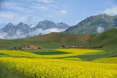 Pod niebieskim niebem rapeseed pole obrazy stock