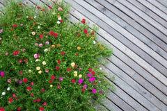 podłoga kwitnie drewnianego zdjęcia stock