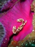 podłogowy kraba ocean Obrazy Stock