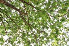pod podeszczowymi gałąź i zieleni liśćmi przeciw naturalnemu światłu Obrazy Royalty Free