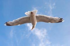 pod seagull Obraz Stock