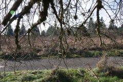 Pod Treein Oregon Zdjęcia Royalty Free