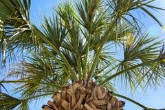 Pod tropikalnym drzewkiem palmowym Obraz Royalty Free