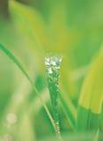 pod waterdrops liście fotografia stock