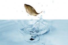pod wodą Zdjęcia Stock