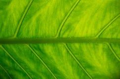 Pod zielonym liściem Zdjęcie Royalty Free