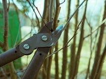 Poda de la primavera del treesn fotografía de archivo