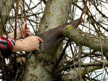 Poda del árbol Imagen de archivo