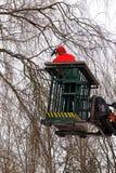 Poda del árbol, leñador con una motosierra en un trabajo elevado pl Fotos de archivo libres de regalías