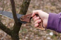 Poda e jardinagem Fotografia de Stock Royalty Free