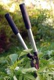 Podadoras viejas del seto con los recortes del seto. Imagen de archivo