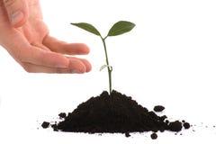 podaj interesy ludzi roślin Fotografia Stock