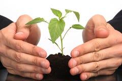 podaj interesy ludzi roślin Zdjęcia Stock