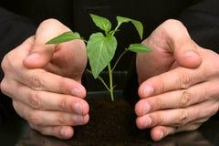 podaj interesy ludzi roślin Zdjęcia Royalty Free