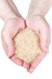 podaj ryżu kobiety s Fotografia Royalty Free