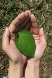 podaj zielone liści Obraz Stock