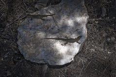 podarcis lilfordi giglioli Στοκ Εικόνες