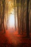 Podczas jesień piękny las Zdjęcia Stock