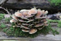 podczas, jesień sezon w lesie, Schollenbos, Capelle aan melina IJssel, holandie, spadek, sezonowy, pieczarka; grzyby fotografia stock