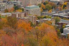 Podczas Spadek Montreal Śródmieście obrazy stock