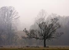 Podczas Zima lasowi Wzgórza Fotografia Stock
