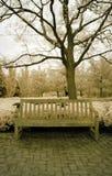 podczerwień ławki parku Obraz Stock