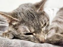 Pode nunca tem que muito sono Foto de Stock Royalty Free