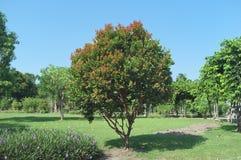 Pode você cheirar uma árvore de florescência imagens de stock royalty free
