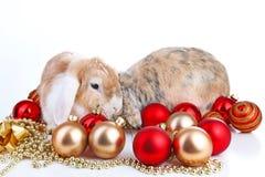 Pode y conejo junto Amigos animales Vivos reales del satén del rex del zorro blanco del animal doméstico del conejito del conejo  Foto de archivo