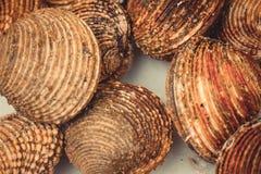 Podejście morscy ślimaczki brązu kolor obraz stock
