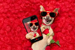 Valentines dog   with  rose petals Royalty Free Stock Photography